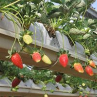 Growing plants with Hydroponics
